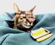 【婆猫ミーちゃん】弱る…