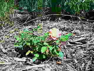 ミーの墓に咲く花一輪